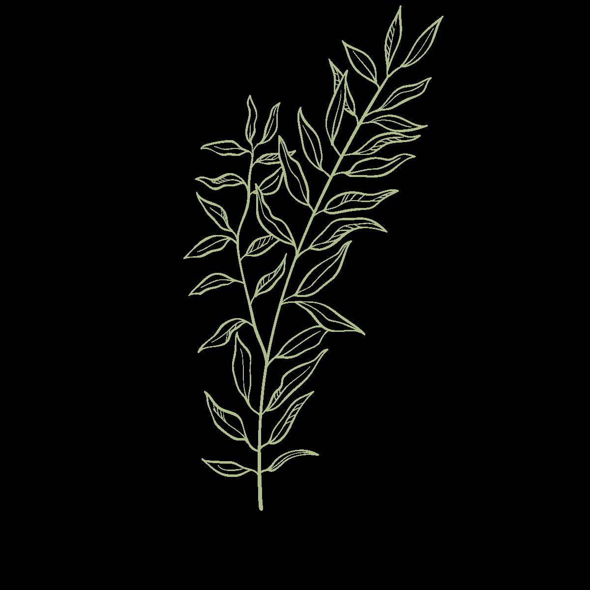 leaf01@2x